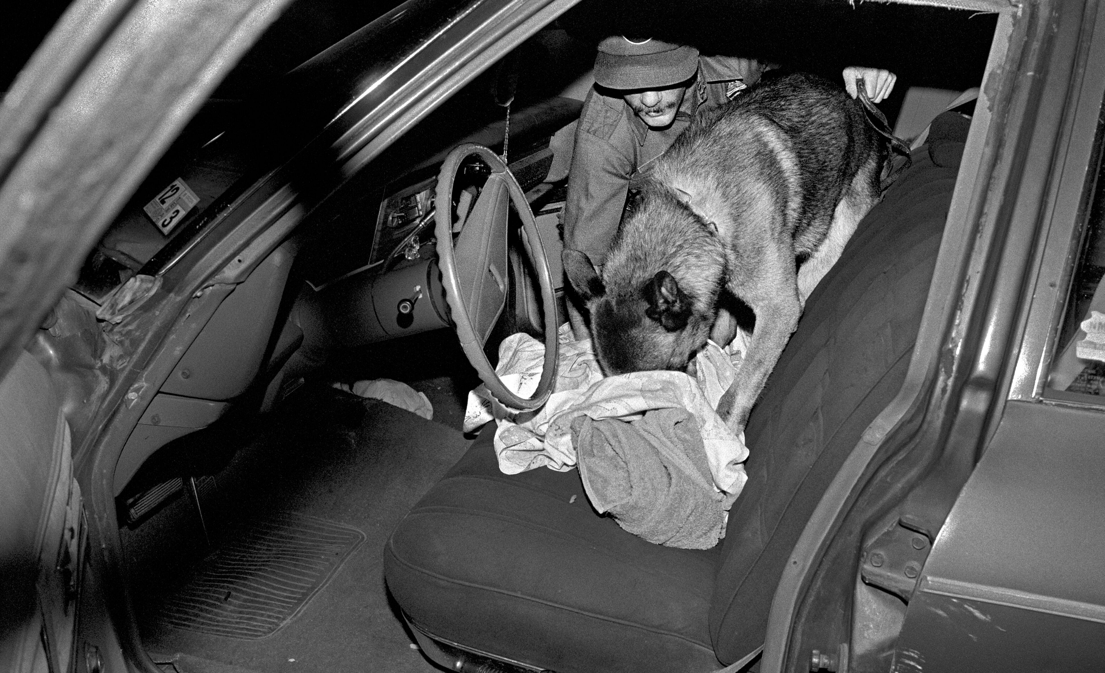 Border Patrol Dog Inspecting Car, Laredo, Texas, 1994