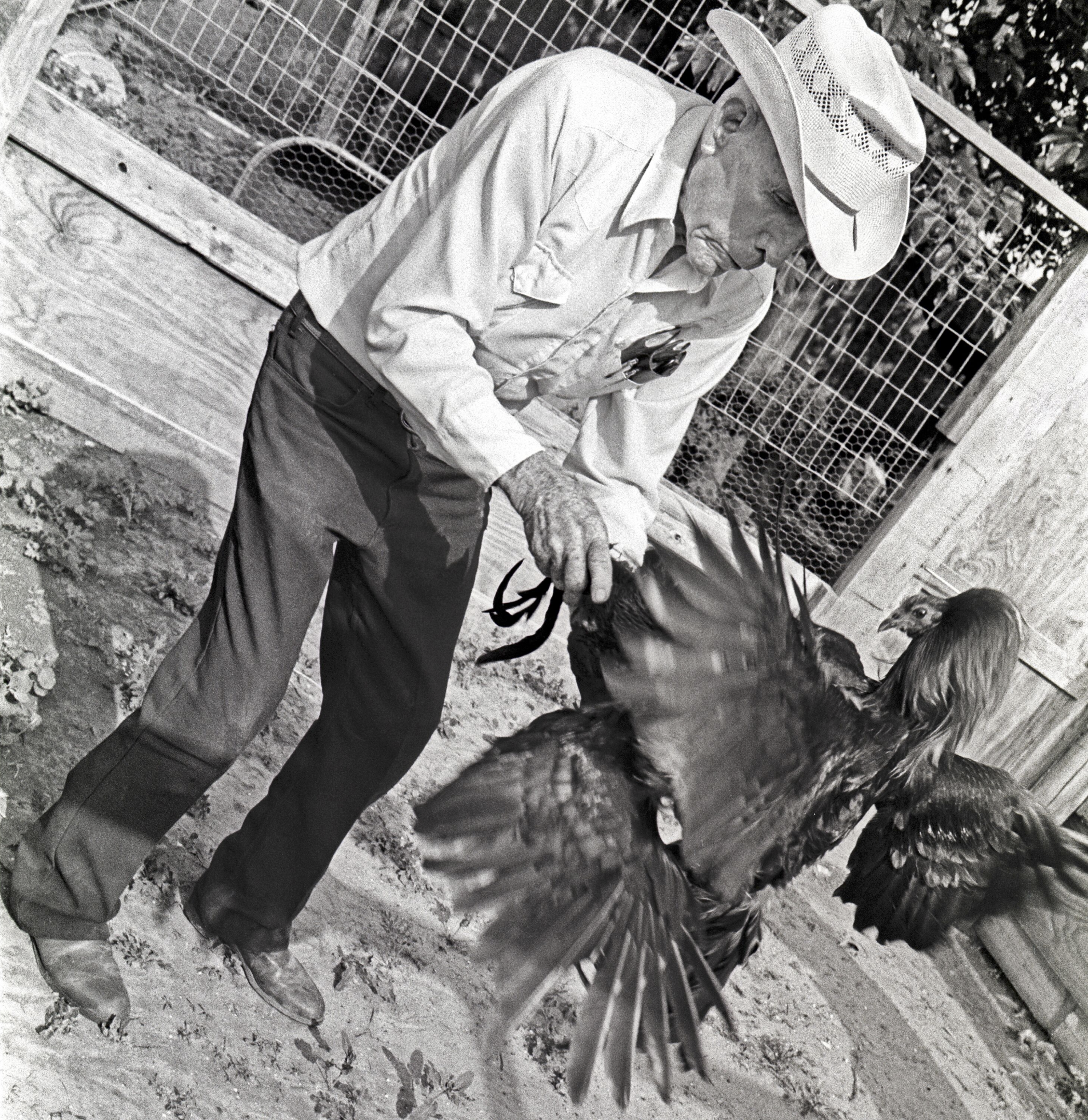 Man Holding Fighting Cock, Webb County, Texas, 1994